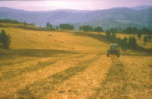 tractor haciendo subsolado